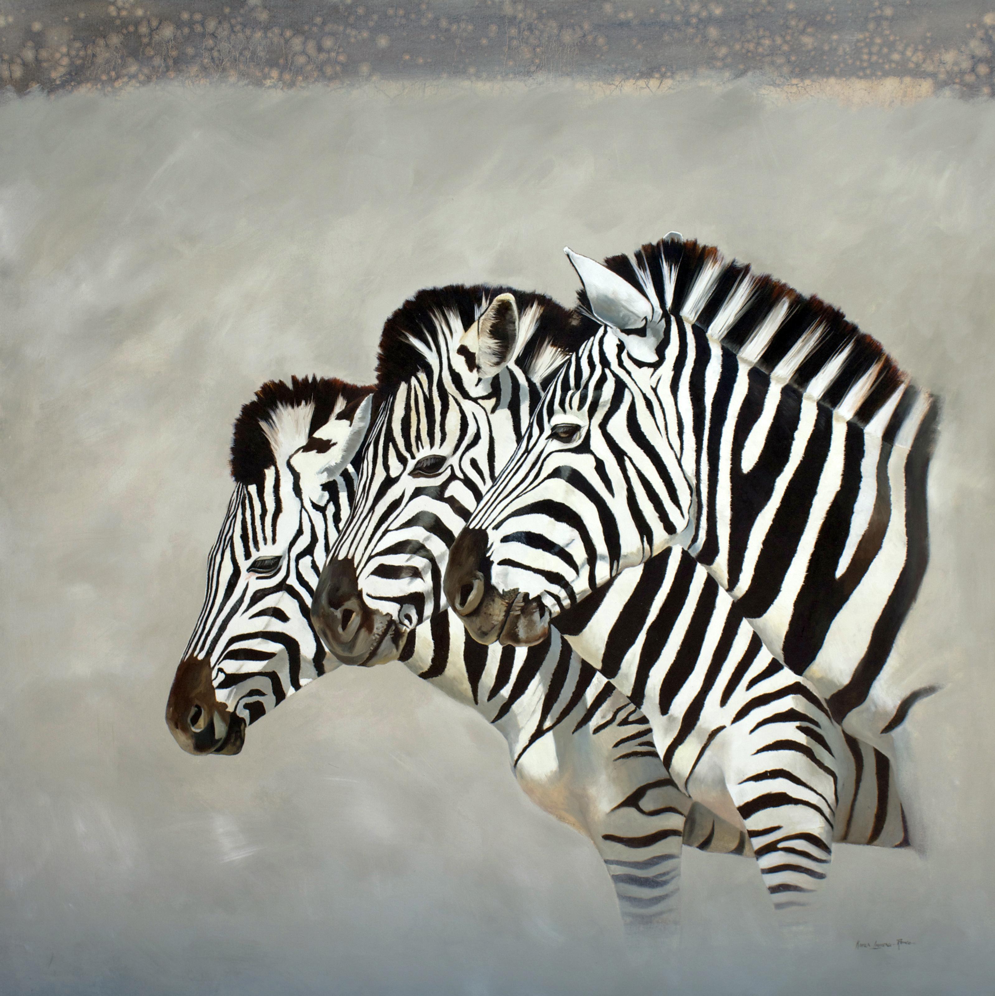 Zebra of the Masai Mara