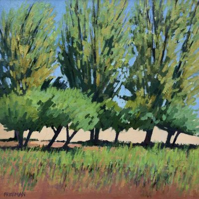 Trees at Nimes by Barry Freeman